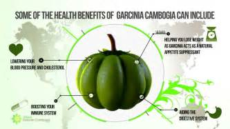 does calcium block garcinia cambogia picture 17