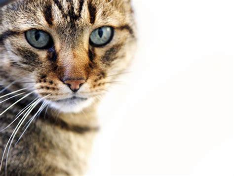 feline picture 5
