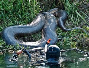 mutant en grows alligator h picture 3