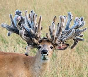 if i put deer anter , on my picture 5