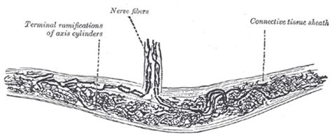lips and nerve endings pus picture 1