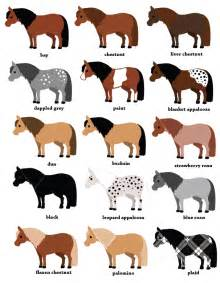 horses skin and coat picture 9