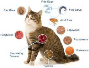 cat worm symptoms picture 2