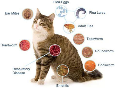 cat worm symptoms picture 2