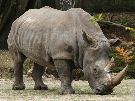 rhino 5 pill how long us it efective picture 3