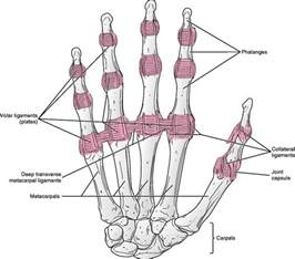 metacarpal phalangeal joint rom measurement picture 5