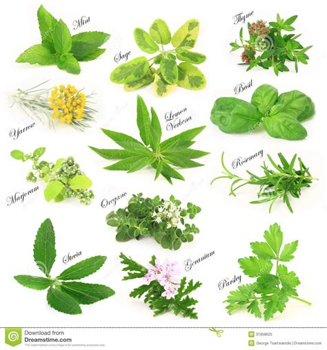 herbal plants picture 5