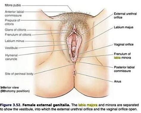 medical insertion in female uretra picture 13