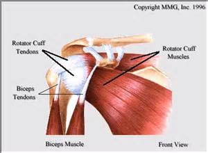 deltoid muscle paralysis picture 15