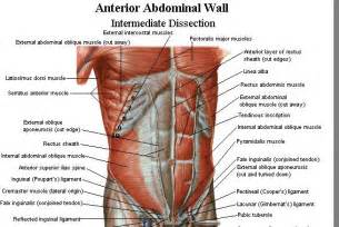 cramping of the abdominal muscle while exercising picture 7
