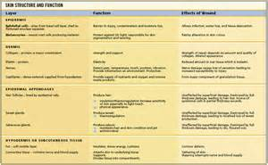 skin functions picture 11