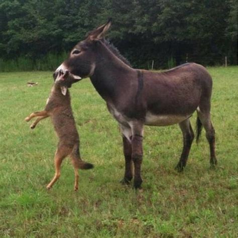from where we get deer for deer farming picture 4