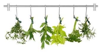 essiac tea benefits picture 6