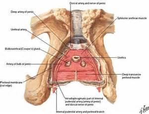 penis close examine picture 13