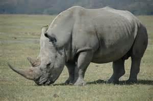 where to buy rhino 5 stimulant picture 9