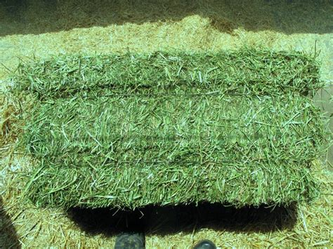 alfalfa hay for sale picture 1