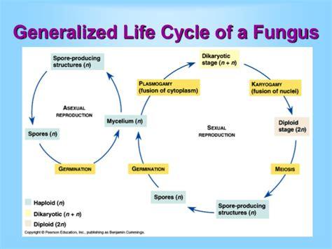 fungi classification picture 3