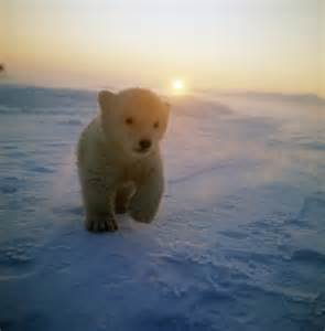 bears and small tumblr picture 17