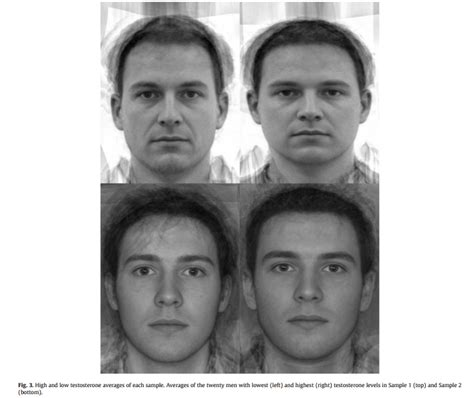 testosterone and jaw development picture 11