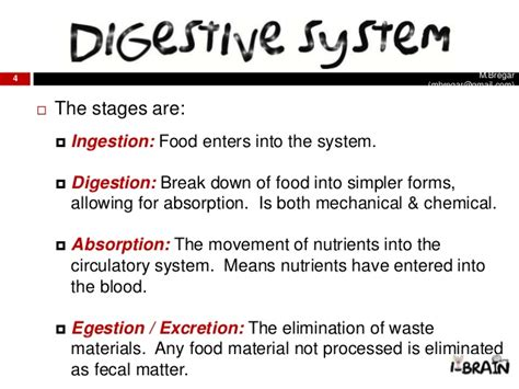 stages in the digestion system picture 1