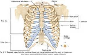 breast bone picture 13