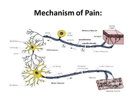 nerve pain relief picture 2