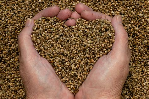 organic chia seed drug picture 11