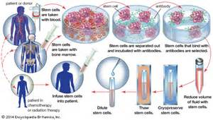 natural alternative ways for bone marrow to make picture 6