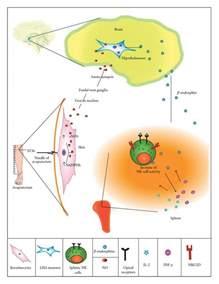 natural stimulation of opiod receptors picture 3