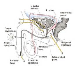 Prostate removal surgery picture 9