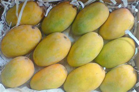 arabian aichun papaya reviews picture 19