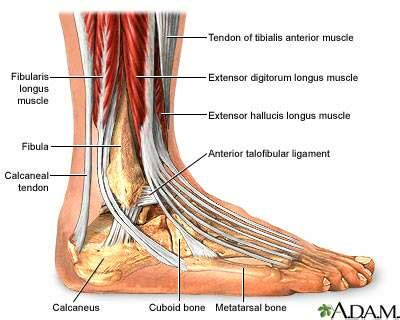 leg muscle pain and weakness picture 5