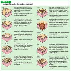 meaning of skin lesions picture 7