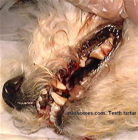 dead dog teeth picture 1