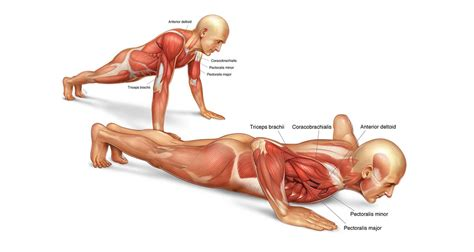 Male enhancement exercise picture 5