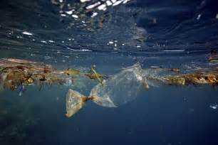 ocean debris picture 7