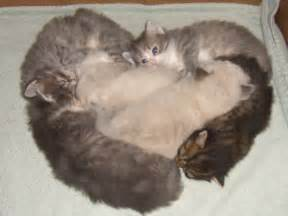 feline h picture 13