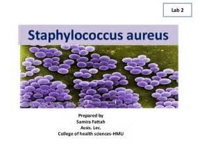 staphylococcus aureus picture 1