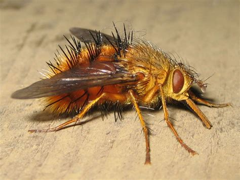 guatemala stomach bug picture 10