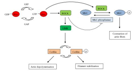 liver enzyme function picture 6