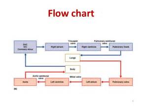 flowcharts of blood circulation picture 7