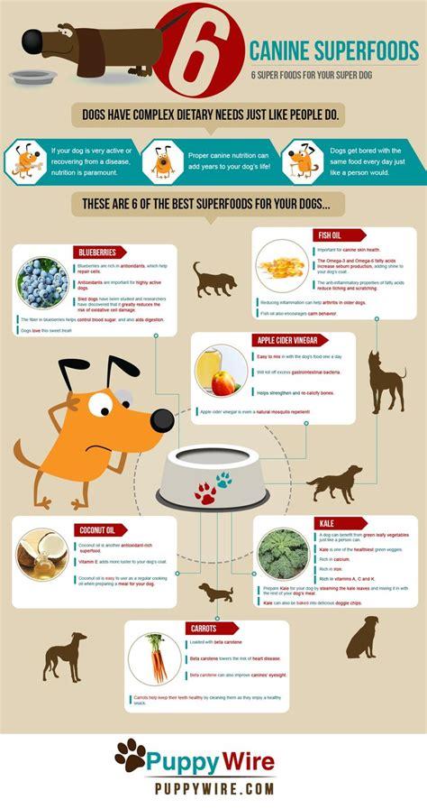 pet diet information picture 14