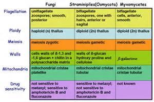 characteristics of fungi picture 1