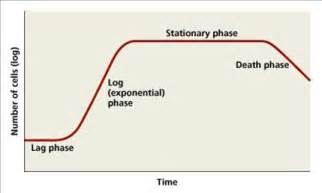 bacterial growth curves picture 5