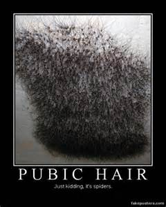 purpose of pubic hair picture 2