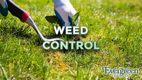weed control picture 10