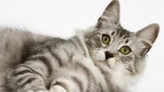 feline h picture 6