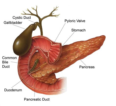 how does sugar affect gall bladder picture 5