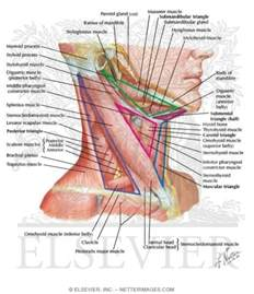 thyroid books picture 6