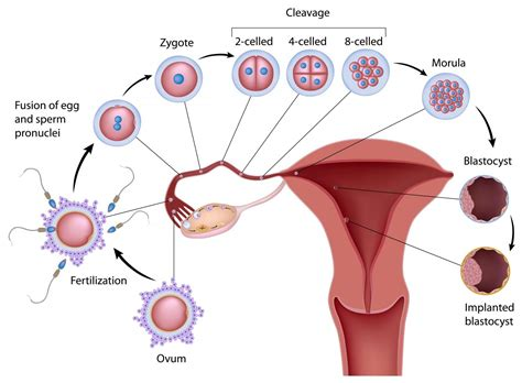 can stameta blood and cell help me conceive? picture 9